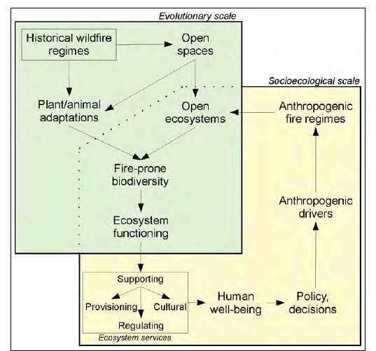 Wildfires as an ecosystem service