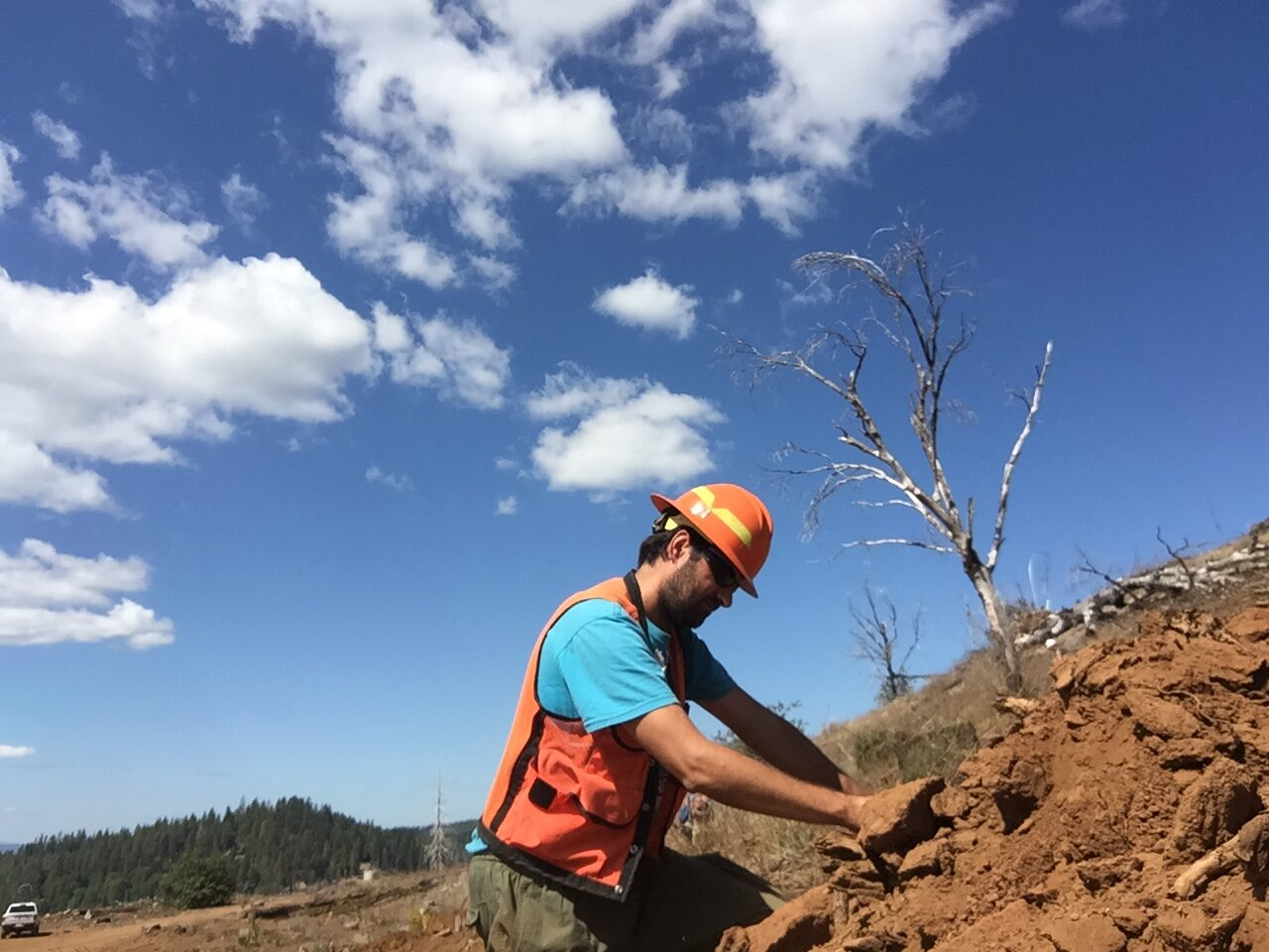 Post of the month 06/2020: <br/>Postfire managing strategies in Mediterranean forest ecosystems: Lessons learned from research works developed at south of Spain